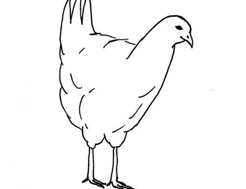 Cyber Chickens